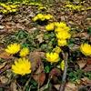 21 , Spring colors … 春の使者芽吹く時