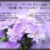 誕生花 10月1日 「友禅菊」