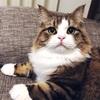 ( ˘ω˘ )まるで別の猫!写真映りの落差が激しいうちの猫とSNSの幻