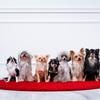8/1「水曜日のDT」「愛犬ドミノチャレンジ」「リアルスラムドッグミリオネア」が面白い!!