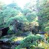 お屋敷の縁側から日本庭園を眺めながらお茶をいただける、葛飾区柴又『山本亭』に行ってきました