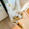 開けゴマ!ご飯の収納されている棚の扉を開けたい愛猫。