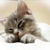 保護ボラのお願い!子猫の里親になりたい人へ理解して欲しいこと