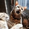 日向をめぐる猫たちの攻防