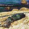 【TR93PEスペシャルでライトエギング】秋イカはランガンで数釣り!デイゲーム鉄板エギカラー!