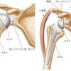 【エポックリハビリコラム】人工肩関節置換術後のリハビリとは?