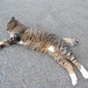 10月前半の #ねこ #cat #猫 その1