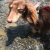175.多摩川で水遊び