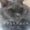 慢性腎不全猫さくらの点滴拒否