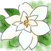クチナシの花が咲いています そして花言葉は・・・?
