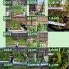 にんにく(遠州極早生)の成長具合を前年と比較してみた、いちご発芽