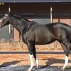 2022年新種牡馬:タリスマニック