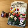 春に希望を込めて・・チューリップを植えました