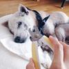 老犬の爪切りに四苦八苦…爪切りの必要性と上手に切るコツとは