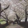 桜見てローラー