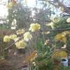 昨日は武蔵小杉の歌会、その後に新年会も