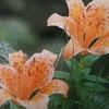 7月18日誕生日の花と花言葉歌句