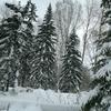 心の原風景は、なぜか森林(タイガ)