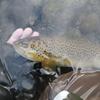北海道 HOW TO 千歳川の釣り   / 近い・濁らない・魚影が濃い