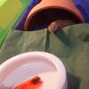 カナヘビ&ハニー
