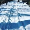 雪景色の玉川上水〜全ての音が調和〜