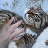 3月前半の #ねこ #cat #猫 その1