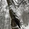 大雪の春分の日。 冬と春の別れめ 「桜のトワイライトウォーク」ご案内
