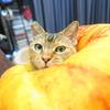 7月後半の #ねこ #cat #猫 どらやきちゃんB