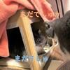 段ボールで猫のこたつをつくってみた