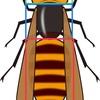 昆虫の定義と繁栄の秘密その2