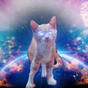 THE SPACE-CAT