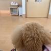 ビックリ動物病院!!(◎_◎;)