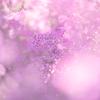 河津桜も咲き始める【木場公園】でエリカや冬の花を撮影しました。(東京都)