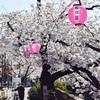 いたばしの桜を見に行きました2021、その2。