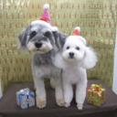 熱海で出会った3匹の犬