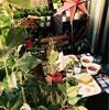 【ベランダDIY作戦④】ベランダでクリスマス&グランピング気分を味わってみた!