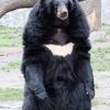 群馬サファリパークで人が熊に殺される!