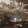 誰にも見られなくても咲く桜