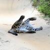 スリランカ旅行4日目・ウィルパットゥ国立公園