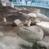 無料で入場できる「江戸川区自然動物園」に行ってきた