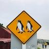 ニュージーランド(ペンギンに会いたい編④)