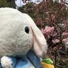 令和3年春二番!立春から春分の間の初めての強い南風!