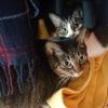 突然の床材張り替え工事に、あたふたする猫たちの行動記録