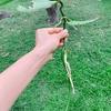 つる性の植物たち