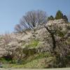 長野県青木村にある令制東山道浦野駅の枝垂れ桜が見事!