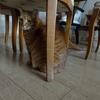 猫さん、大脱走!