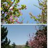 西安環城公園:吉備真備記念庭園