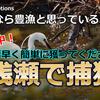 待望の新教材「浅瀬で捕獲」発売スタート!