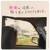 菜の花ドライブ 桜ドライブ 紫陽花ドライブ