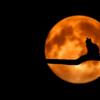 今日は満月です(^^)/